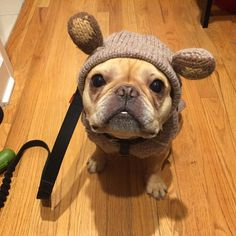 ❌ ---------- You win, Mother Nature, you win. Had to team up with my humans to end my 1st poop strike in 2017. I had a good run, filled with naps + more naps without having to do my #2 biz. But you stepped in + squashed it.  ---------- #hamlin #hamlinthefrenchie #frenchbulldog #poopstrike2017 #tookcareofnumber2 #pottybreak #thestreakends