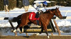 Noble Moon(2011)Malibu Moon- Mambo Bell By Kingmambo. 3x3 To Mr. Prospector. 15 Starts 2 Wins 4 Seconds 1 Third. $399,100.  Won 2014 Jerome Stakes(G2), 2nd 2013 Nashua Stakes.