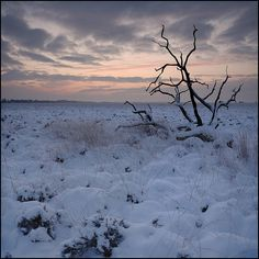 A Tundra is characterized by permafrost. During the short, cool summer, the ground thaws to a depth of a few centimeters and becomes soggy and wet. In the Winter, the topsoil freezes again. This cycle of thawing and freezing , which rips and crushes plant roots, is one reason that Tundra plants are small and stunted.