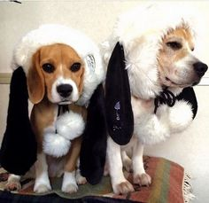 Festive long eared hats, now we have Balls too!