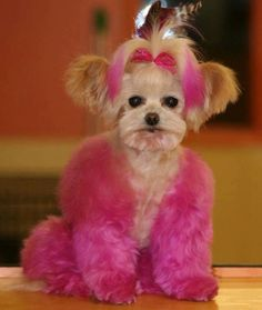 Kayla's Posh Pets Grooming & Boutique is here for you when you need grooming for dogs in or around Mason OH. Give us a call today! Extreme Pets, Dog Dye, Creative Grooming, Pink Dog, Pet Safe, Pet Grooming, Animal Design, Favorite Color, Favorite Things