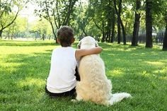 Teenager boy in the park with a golden retriever dog Poster. Pet Friendly Cabins, Plus Belle Citation, Dog Poster, Dogs Golden Retriever, Retriever Dog, Therapy Dogs, Horse Therapy, Pet Loss, Dog Park