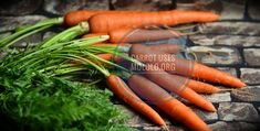 Carrots are available in various colors – purple, white, red, and more commonly orange. It forms an important ingredient in some dishes. Carrots are loaded with beta-carotene (a form of Vitamin A), vitamin C, minerals, and antioxidants that offers a lot of health-enhancing benefits. As healthy as