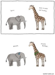 Liz Climo is back, and she has a whole book of hilarious animal comics! From killer whales to porcupines, dinosaurs to polar bears, Climo attributes a delightful simple sense of humour to all her animal Funny Animal Comics, Animal Jokes, Cute Comics, Funny Comics, Awkward Animals, Funny Animals, Cute Animals, Liz Climo Comics, Tierischer Humor