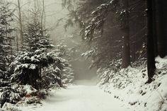 https://flic.kr/p/8XkB3d   Mysterious forest
