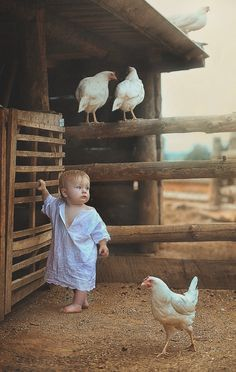 OMG! Under no circumstances should this child be barefoot I'm the chicken pen!!!!! I shudder at the thought of what parasites could enter het little body through those bare feet!! Chickens desiccate anywhere they please! Never allow this for your child!