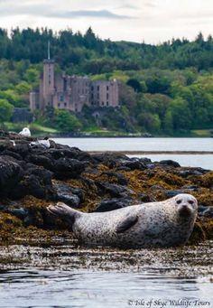 Isle of Skye Wildlife Tours