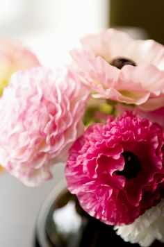 pastel pink flowers with a hint of a strong pink