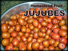 Many of you have never heard of jujubes and wonder what they are, what they taste like and how to use them.  http://taylormaderanch.com/blog/old-homestead-tree-and-fruit-mystery-solved/  I also wrote about various ways I preserved that sweet fruit here --> http://taylormaderanch.com/blog/preservi