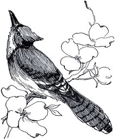 Blue Jay Drawing - The Graphics Fairy
