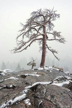 Lake Tahoe - Pines in Emerald Bay