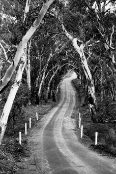 Winding Road. Barossa Valley, South Australia. By Theresa Avery.