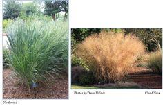 Oklahoma proven plants. Switchgrass
