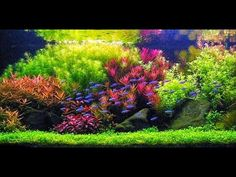 Blue Aquarium is your source for freshwater aquarium plants gallery and finding aquarium plants information. Blue Aquarium hope to make your fish tank look like a real tiny piece of nature by aquarium plants decoration ideas. Planted Aquarium, Diy Aquarium, Nature Aquarium, Aquarium Filter, Aquarium Design, Aquarium Aquascape, Nano Aquarium, Betta, Aquascaping Plants