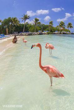 O que fazer em Aruba: dicas e roteiro de lua de mel de 5 dias nessa famosa ilha do Caribe