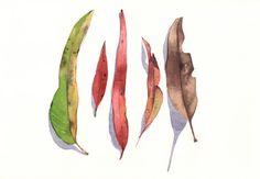 Feuilles d'eucalyptus impression peinture - E026 - d'aquarelle format A4 impression