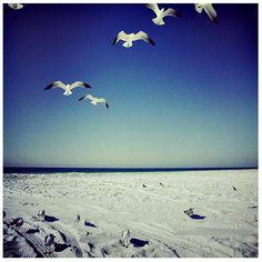 Gulls flock to the beach along Highway 30-A.