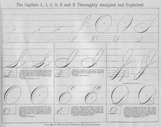 ladies spencerian script