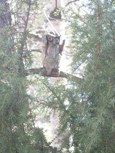 Tämä pöllö on puukalikka.