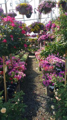 faire livrer des fleurs 38 #fleurs #bouquet