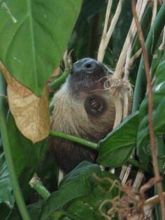 National Aquarium, Baltimore: Sloth