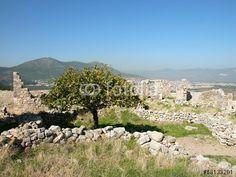 Olivenbaum in den Ruinen der Festung Pecinkale in Anatolien im Westen der Türkei bei Bodrum