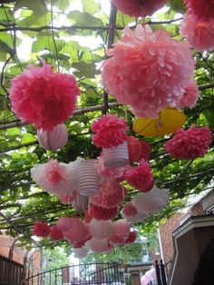 Pompons nice for gardens