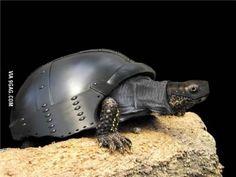 tortuga tanque, al ataque…