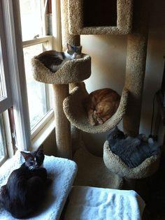 Cats tree diy