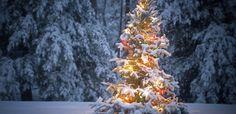 Ook in de winter is het een prachtige belevenis! bij Appels plukken Olmenhorst