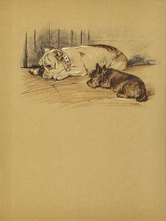 BULLDOG 1930s Antique Dog Book Print  Vintage by HucksterHaven, $15.00