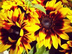 Love those Fall Colored Sunflowers Etsy Shop SmartBLondes Handmade@Amazon/ Shop Smart Blondes