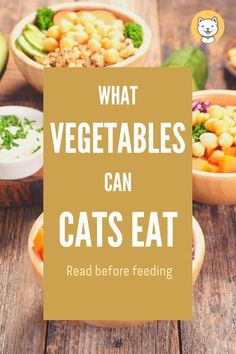 """Are you looking for a healthy diet for your cats? Try find out the answer to this question, """"What vegetables can cats eat? Cat Health Care, Health Tips, Cat Care Tips, Pet Care, Kinds Of Fruits, Animal Nutrition, Eat Fruit, Healthy Fruits, Cata"""