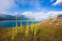 Glacier National Park, Montana (MT), USA photograph by Jay Patel