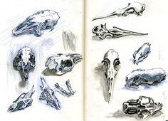 Small_fluffy_animal_skulls_by_Nicoll. Sketchbook Online, Art Sketchbook, Bird Bones, Skull And Bones, Character Art, Character Design, Skull Anatomy, Fluffy Animals, Sketchbook Inspiration