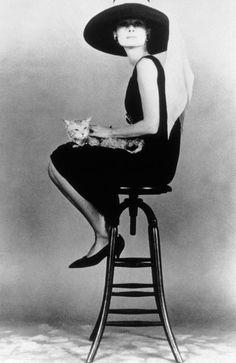 Audrey cat et chapeaux