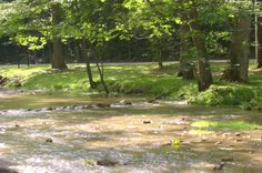 Creek at Spring Mill State Park