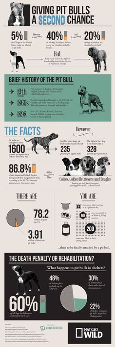"""This infographic provides a deeper look into the truth about the pit bull breed.""  Where do you stand on this?"