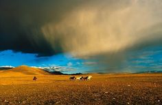 """""""Horses under the clouds, at 4800 metres feet) altitude in Bayang, western Tibet. Gaia, Matthieu Ricard, Cool Pictures, Beautiful Pictures, Art Photography, Travel Photography, Photo D Art, Landscape Photographers, Beautiful Landscapes"""