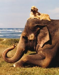 Elephant, dog, sea, grass, by Bruce Weber