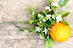 Orange blossoms. Naranja y flor de azahar