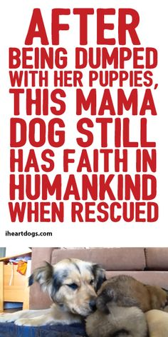 After Being Dumped With Her Puppies, This Mama Dog Still Has Faith In Humankind When Rescued