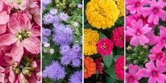 Τα ομορφότερα ανοιξιάτικα λουλούδια για να φυτέψουμε σε κήπο και σε γλάστρα στο μπαλκόνι για να γιορτάσουμε την άνοιξη όπως της αρμόζει. Find Picture, Pretty Pictures, Dandelion, Pure Products, Landscape, Nature, Flowers, Plants, Beautiful
