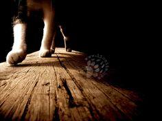 """Escluso il mio direi ... fa lo stesso rumore di un cavallo :D  """"Ai gatti riesce senza fatica ciò che resta negato all'uomo:  attraversare la vita senza fare rumore."""" Ernest Hemingway  #Hemingway, #gatti,"""