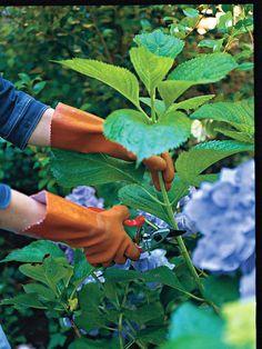 Slide Wendy's Rooting Tips Pruning Hydrangeas, Hydrangea Landscaping, Front Yard Landscaping, Landscaping Ideas, Flowers Perennials, Shade Garden Plants, Indoor Flowering Plants, Big Plants, Smooth Hydrangea