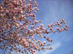 Cuneo e dintorni: Primavera sulla pista ciclabile