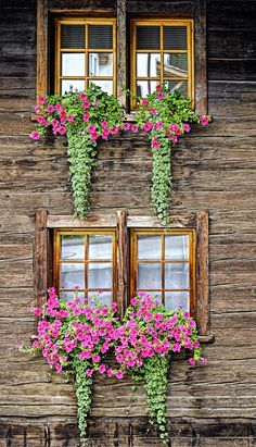 "Fabulous Flower Boxes on ""The Old Cottage"" 🌺 Window Box Flowers, Balcony Flowers, Balcony Planters, Balcony Garden, Flower Boxes, Garden Planters, Box Garden, Outdoor Balcony, Fall Planters"