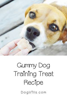 If you're looking for a unique reward to use in training sessions, you'll love our homemade gummy dog training treat recipe! Check it out! Homemade Dog Treats, Homemade Baby, Dog Treat Recipes, Baby Food Recipes, Dog Training Treats, Puppy Gifts, Canned Dog Food, Healthy Herbs, Best Dog Food