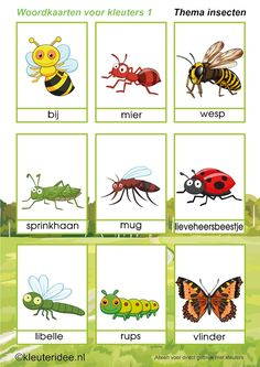 ►Interactive theme image ►Interactive kindergarten songs ►Language activities ►Math activities ►Educational games IWB or tablet ►Writing activities ►Crafts Bug and insect names with pictures Preschool Worksheets, Preschool Activities, Fly Drawing, Learn Dutch, Kindergarten Songs, Dutch Language, Bugs And Insects, Animal Projects, Language Activities