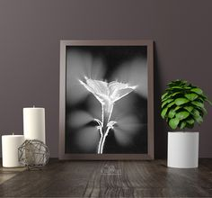 FREE floral wall art printable 8x10 pictures for modern farmhouse interior